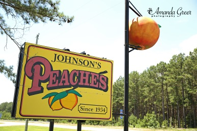 Johnsons Peaches 13 WM